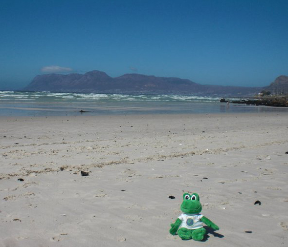 Polly #43 sitting on the beach in South Africa