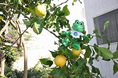 Polly the Travel Frog in Morocco